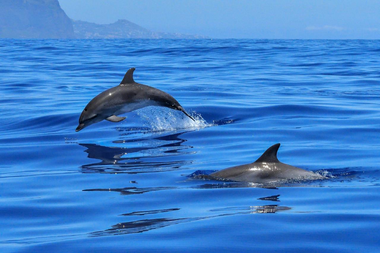 В Монако стартуют туры по наблюдению за дельфинами и китами