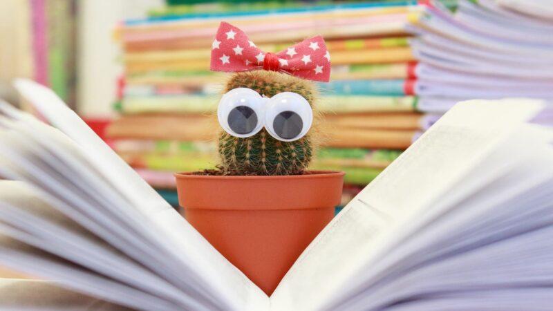 День знаний в библиотеке